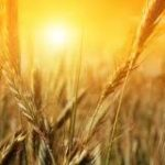 Wheat from the tares